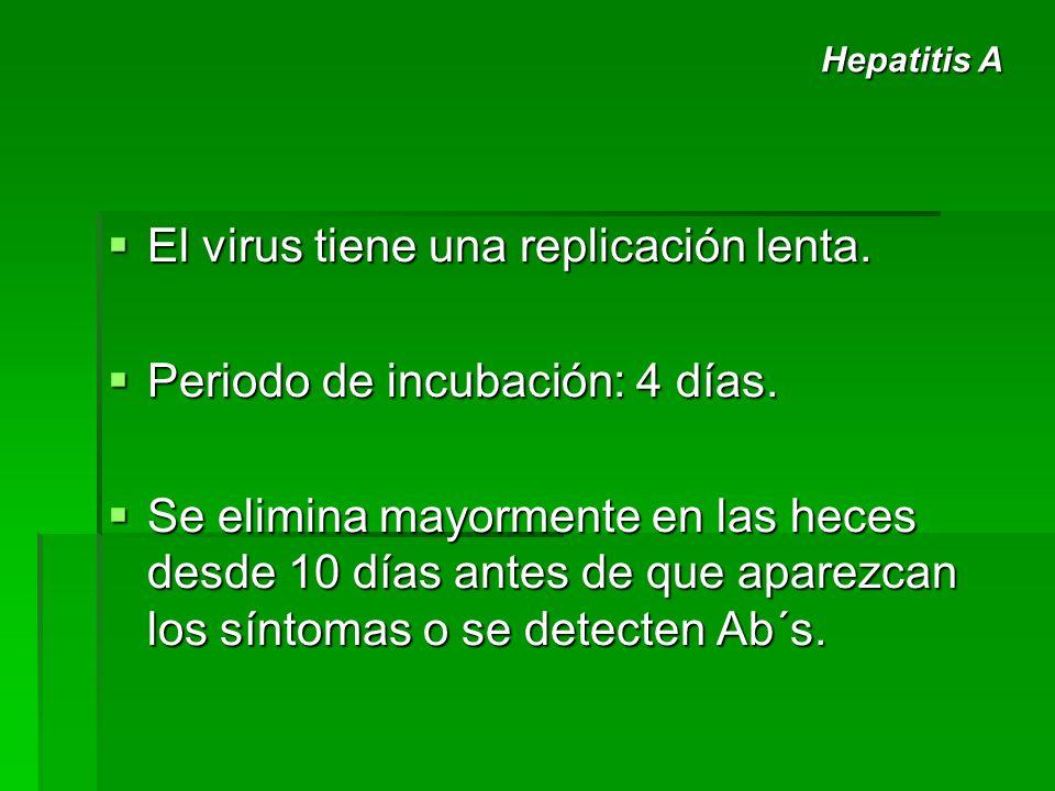 El virus tiene una replicación lenta. Periodo de incubación: 4 días.