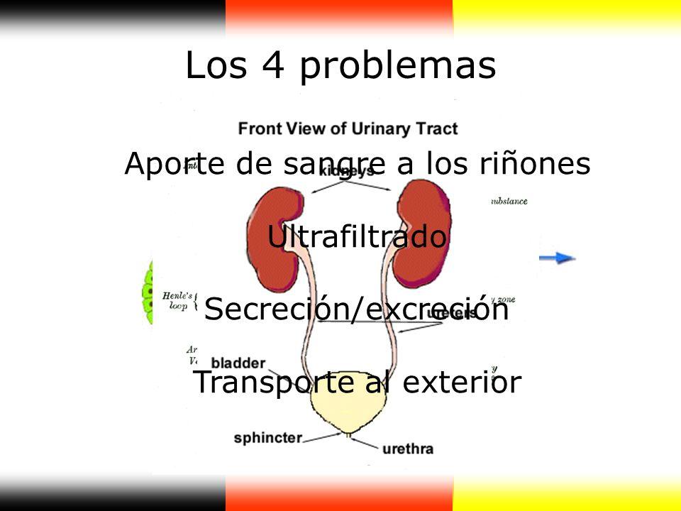 Los 4 problemas Aporte de sangre a los riñones Ultrafiltrado