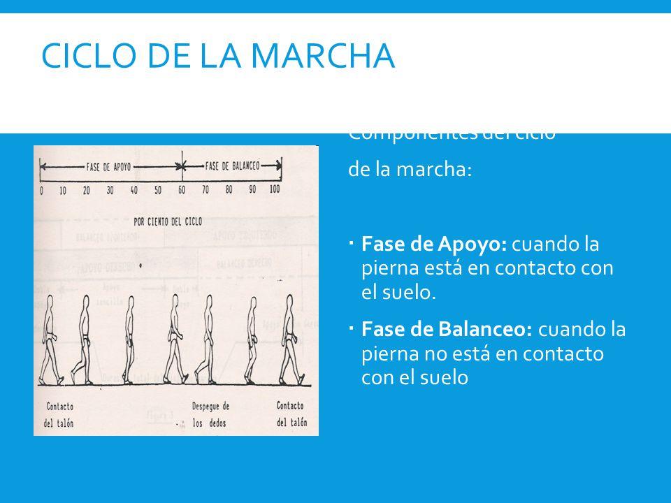 CICLO DE LA MARCHA Componentes del ciclo de la marcha: