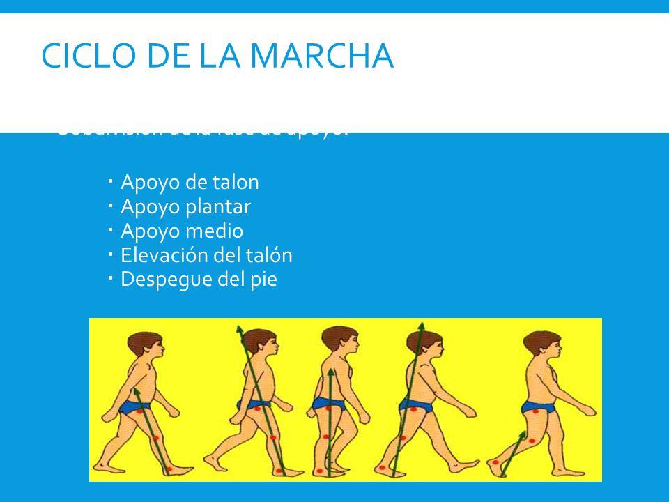 CICLO DE LA MARCHA Subdivisión de la fase de apoyo: Apoyo de talon