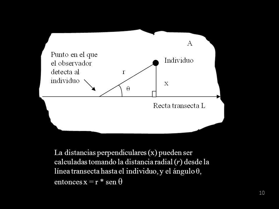 La distancias perpendiculares (x) pueden ser calculadas tomando la distancia radial (r) desde la línea transecta hasta el individuo, y el ángulo θ, entonces x = r * sen θ