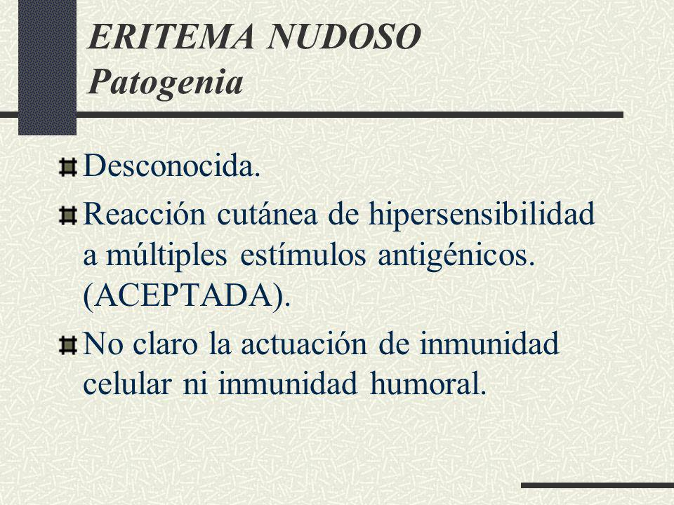 ERITEMA NUDOSO Patogenia