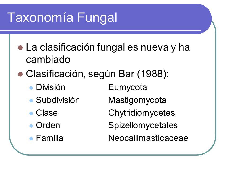 Taxonomía Fungal La clasificación fungal es nueva y ha cambiado