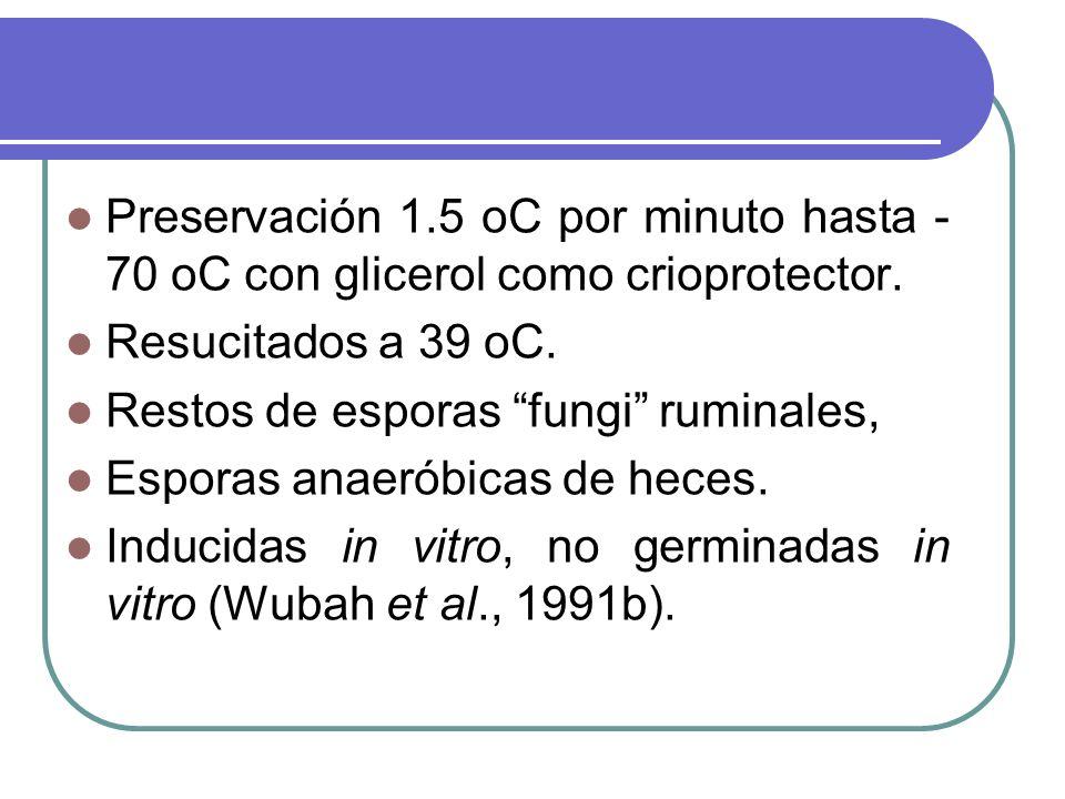 Preservación 1.5 oC por minuto hasta -70 oC con glicerol como crioprotector.