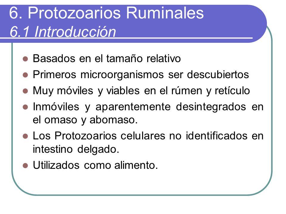 6. Protozoarios Ruminales 6.1 Introducción
