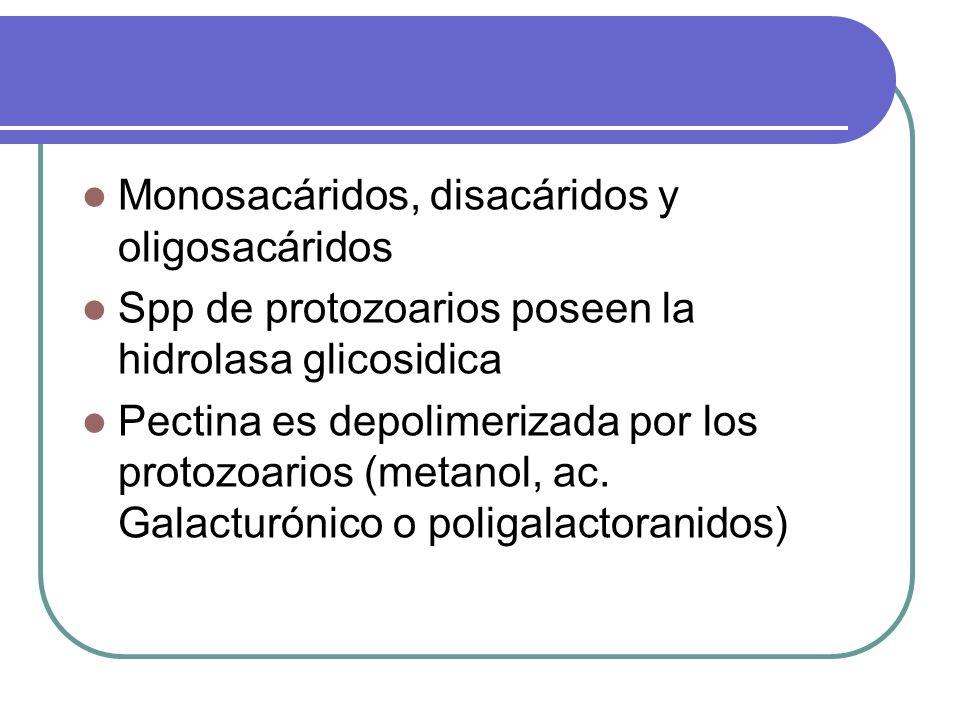 Monosacáridos, disacáridos y oligosacáridos