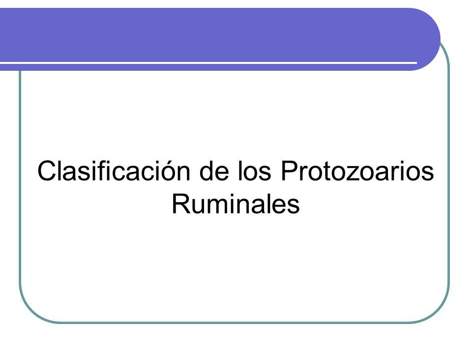 Clasificación de los Protozoarios Ruminales
