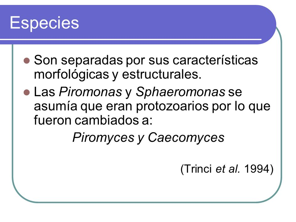 Piromyces y Caecomyces