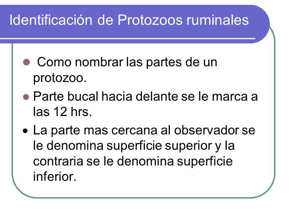 Identificación de Protozoos ruminales