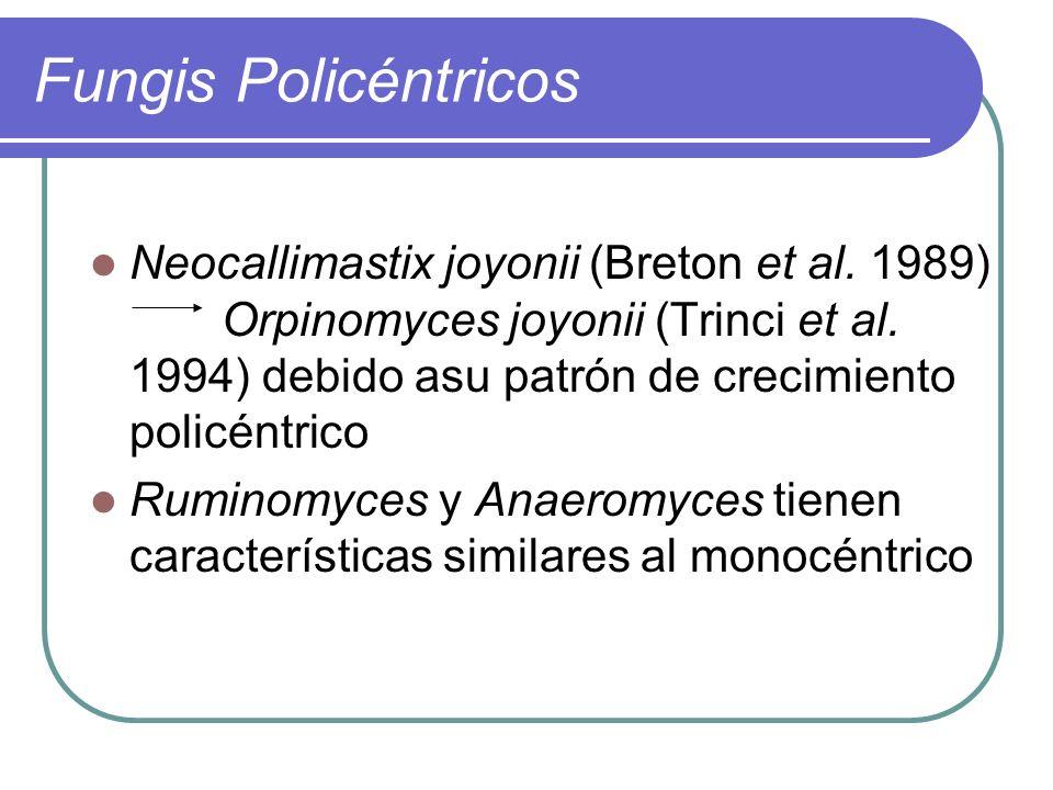 Fungis Policéntricos