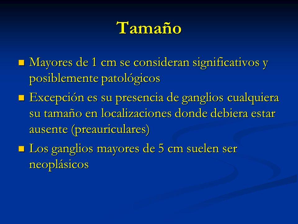 TamañoMayores de 1 cm se consideran significativos y posiblemente patológicos.