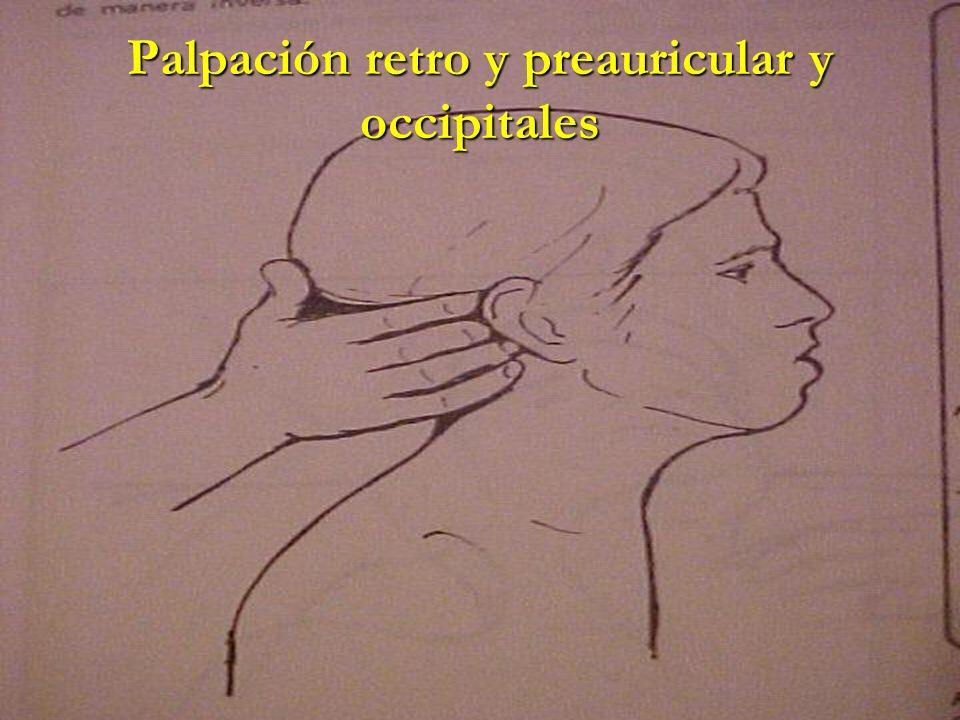 Palpación retro y preauricular y occipitales