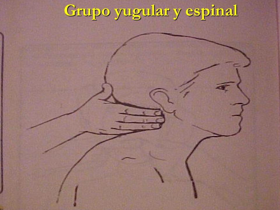 Grupo yugular y espinal