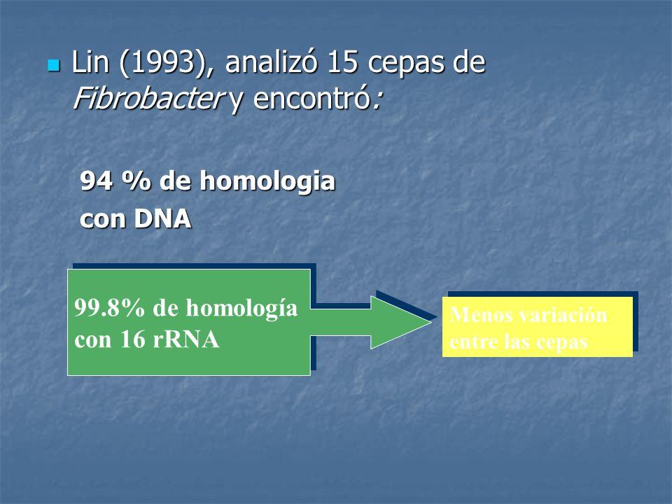 Lin (1993), analizó 15 cepas de Fibrobacter y encontró:
