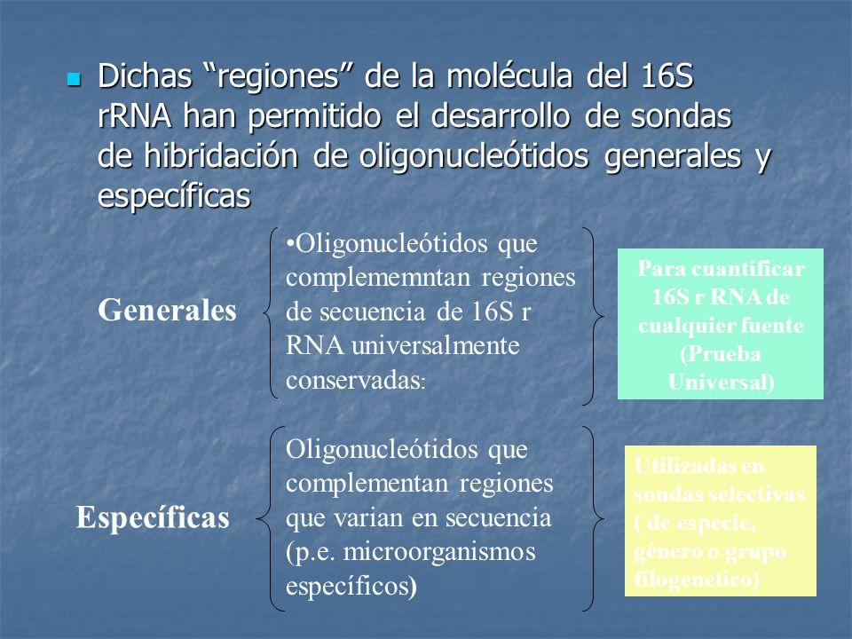 Para cuantificar 16S r RNA de cualquier fuente (Prueba Universal)
