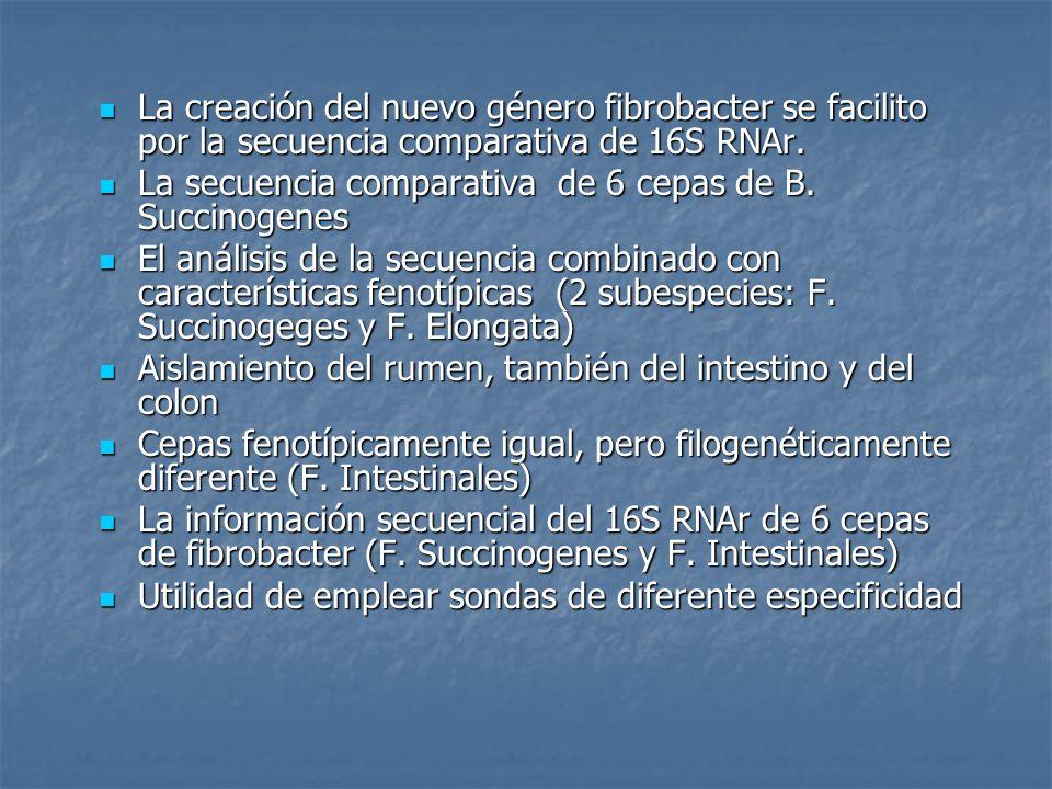 La creación del nuevo género fibrobacter se facilito por la secuencia comparativa de 16S RNAr.