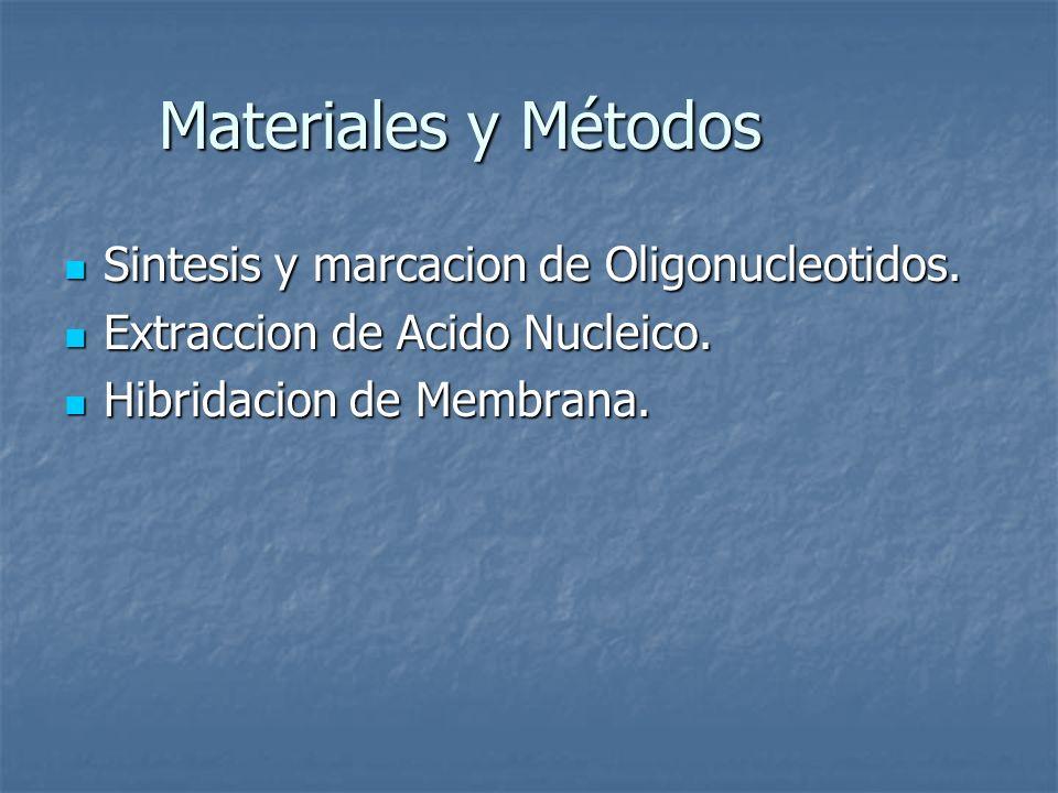 Materiales y Métodos Sintesis y marcacion de Oligonucleotidos.