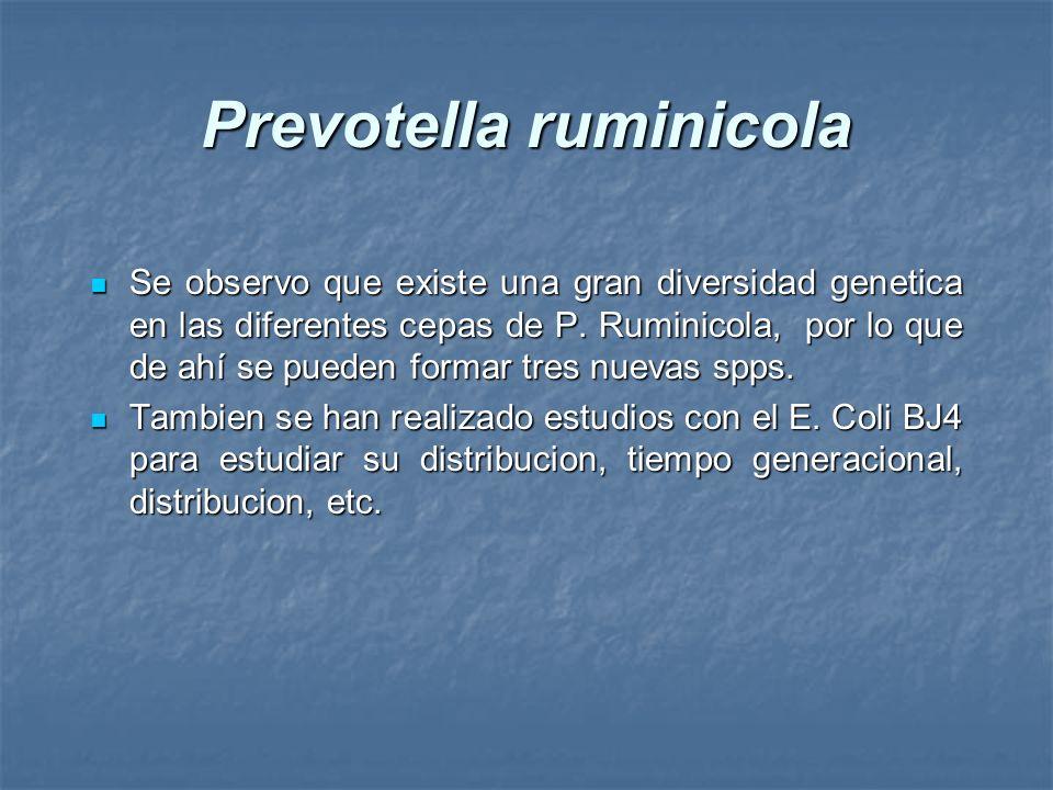 Prevotella ruminicola