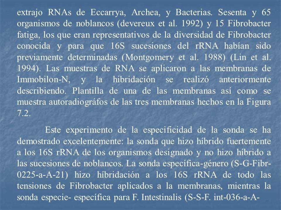 extrajo RNAs de Eccarrya, Archea, y Bacterias