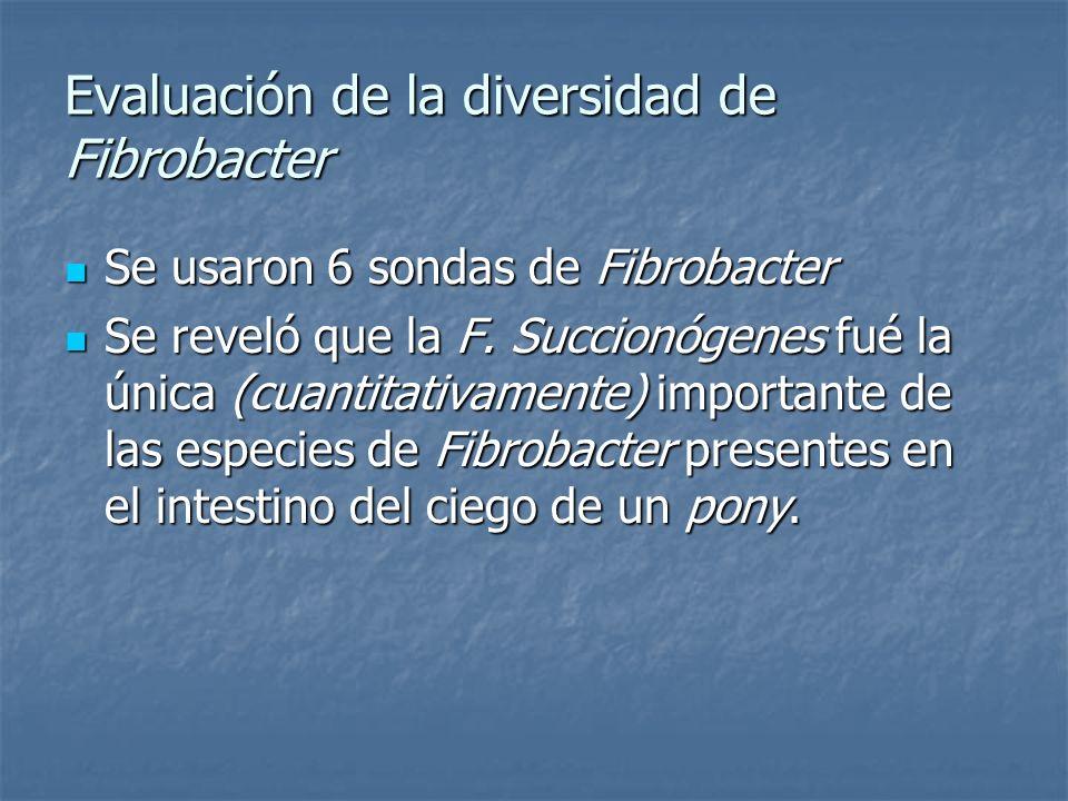 Evaluación de la diversidad de Fibrobacter