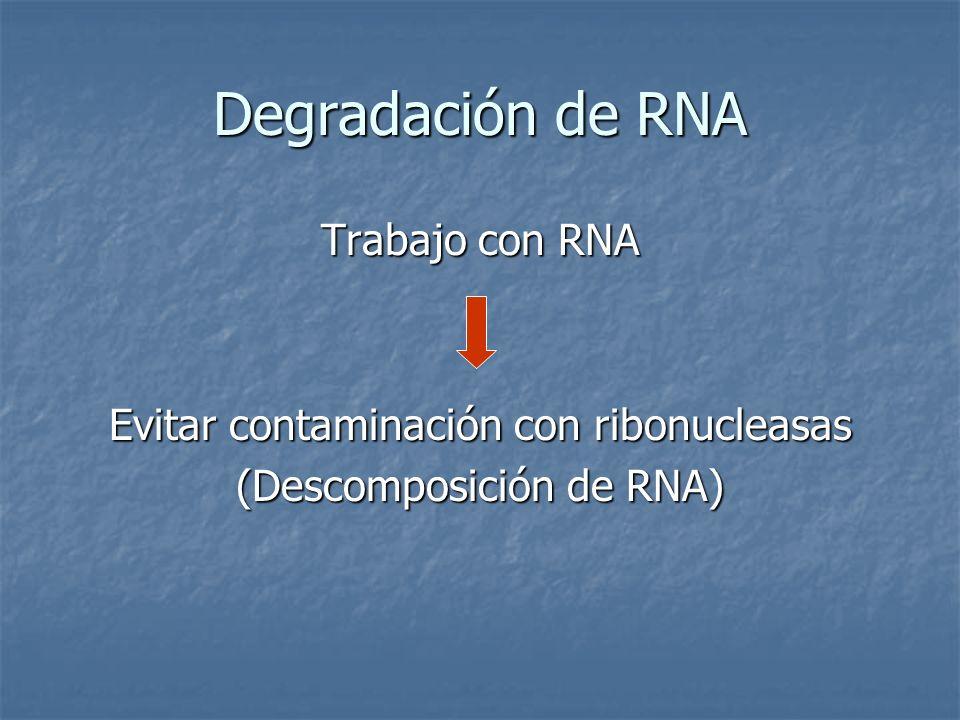 Degradación de RNA Trabajo con RNA
