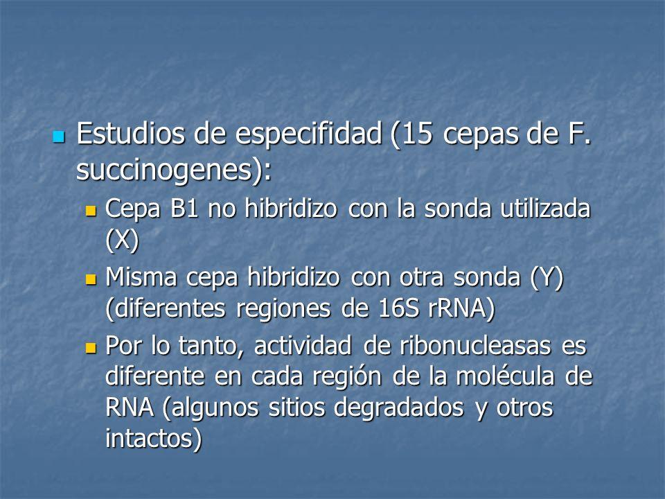 Estudios de especifidad (15 cepas de F. succinogenes):