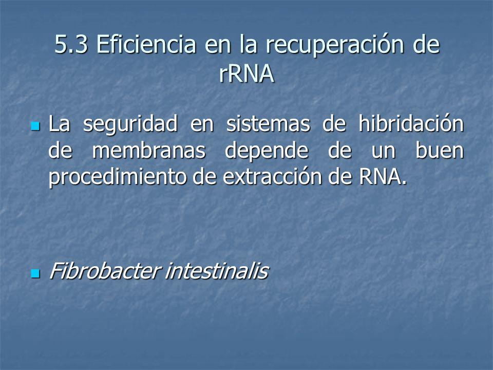 5.3 Eficiencia en la recuperación de rRNA