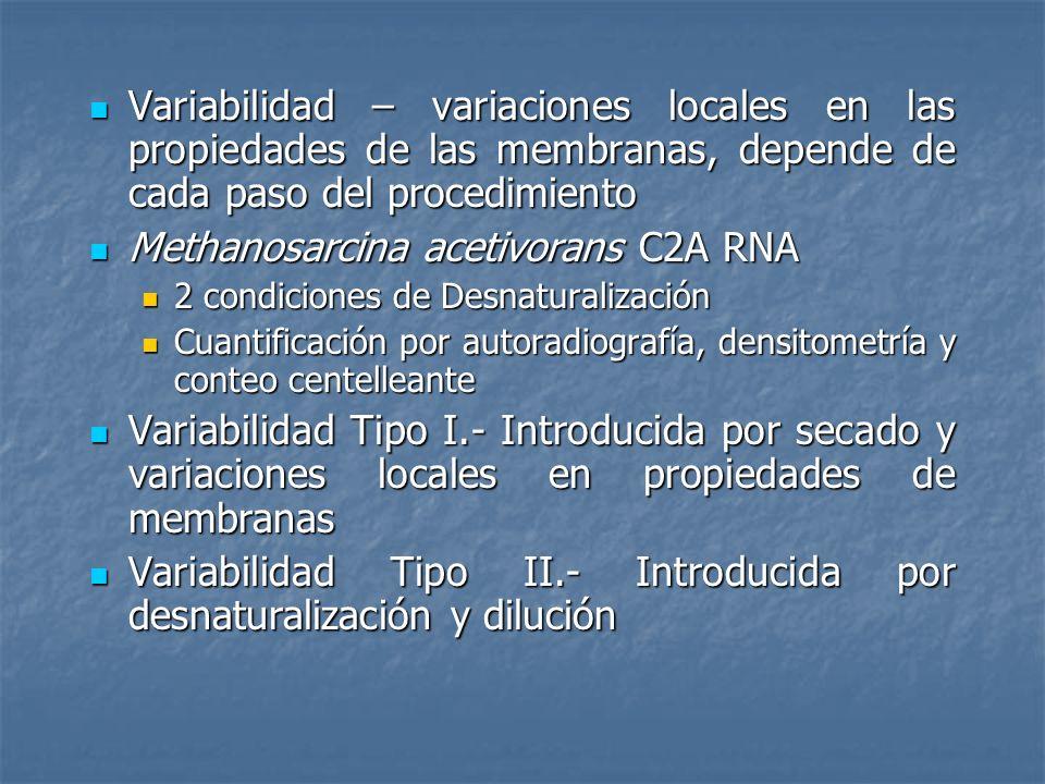 Methanosarcina acetivorans C2A RNA