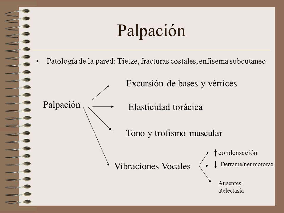 Palpación Excursión de bases y vértices Palpación Elasticidad torácica