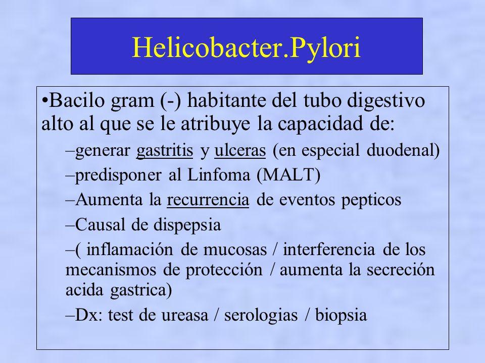 Helicobacter.Pylori Bacilo gram (-) habitante del tubo digestivo alto al que se le atribuye la capacidad de: