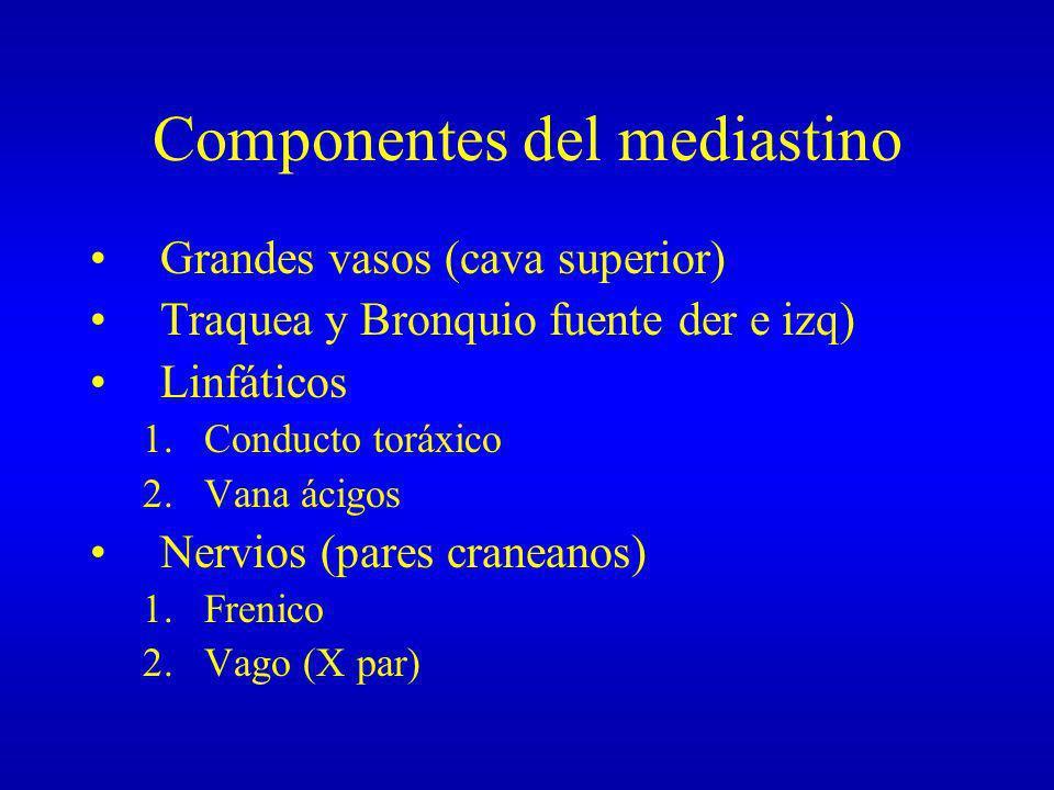 Componentes del mediastino