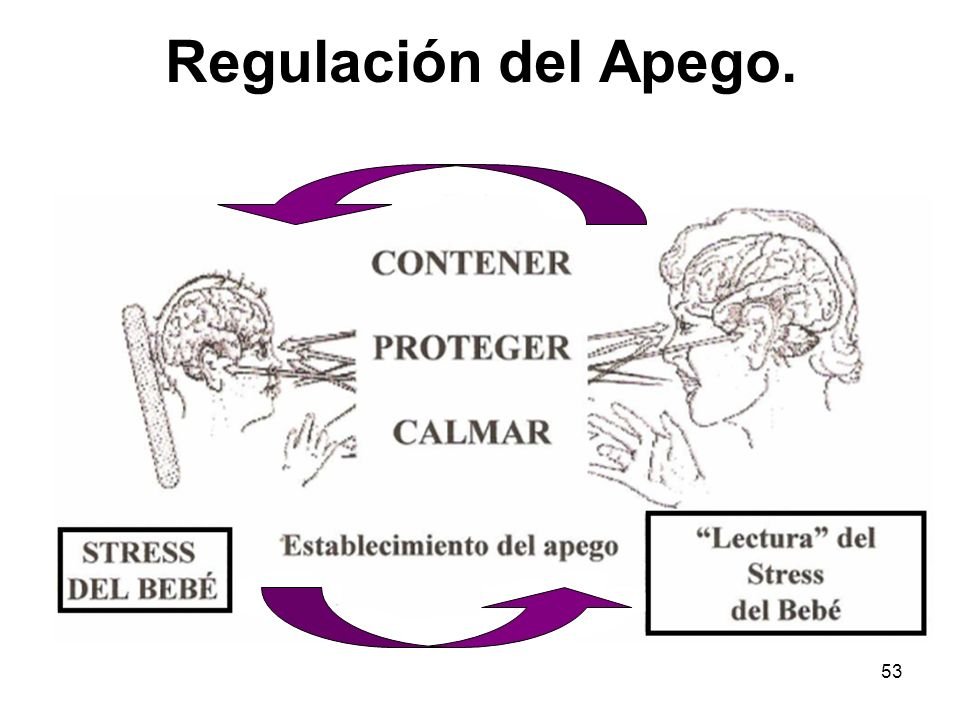 Regulación del Apego.