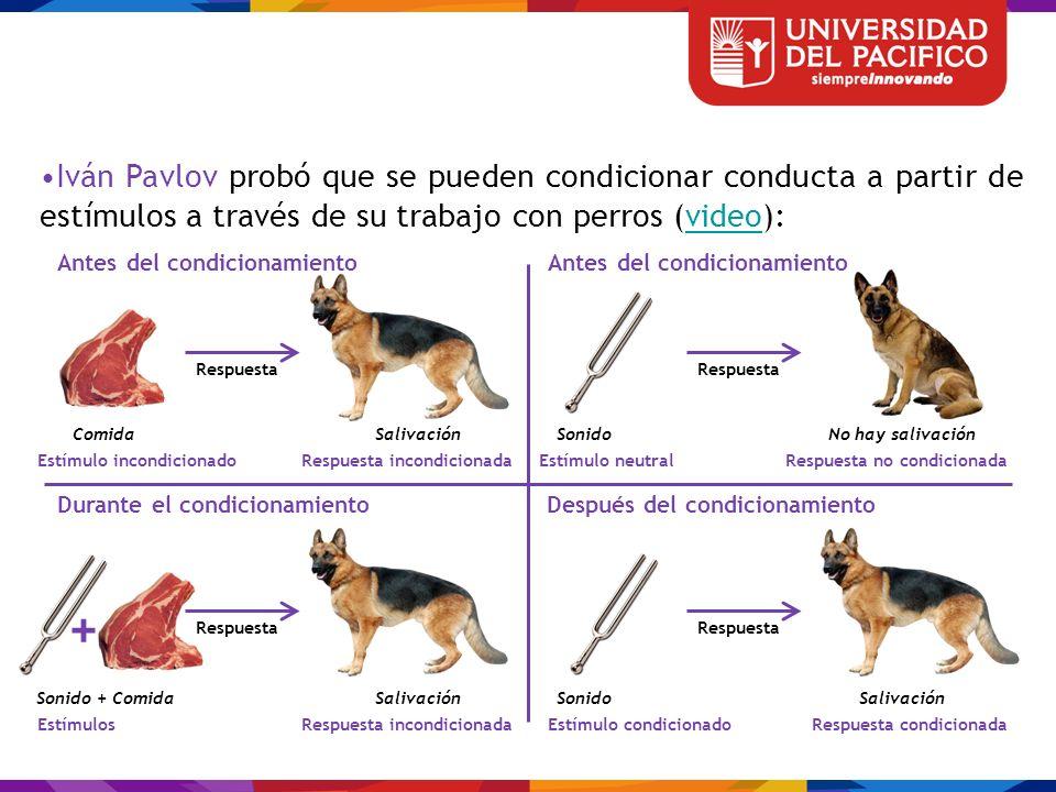 Iván Pavlov probó que se pueden condicionar conducta a partir de estímulos a través de su trabajo con perros (video):