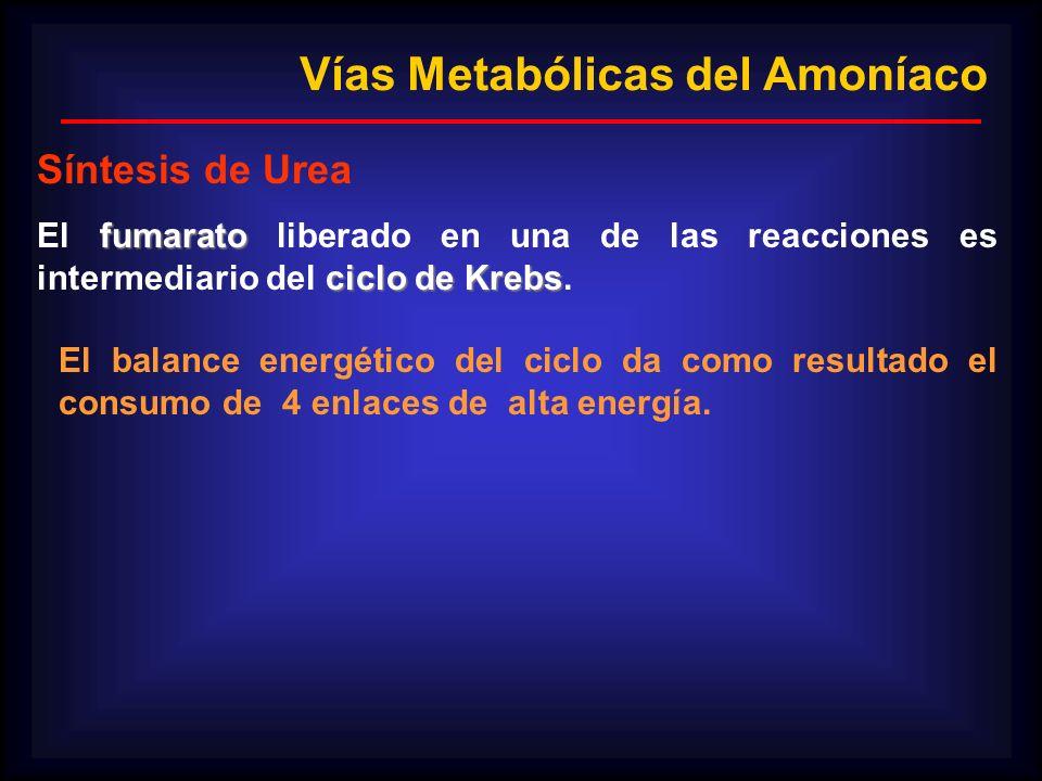 Vías Metabólicas del Amoníaco