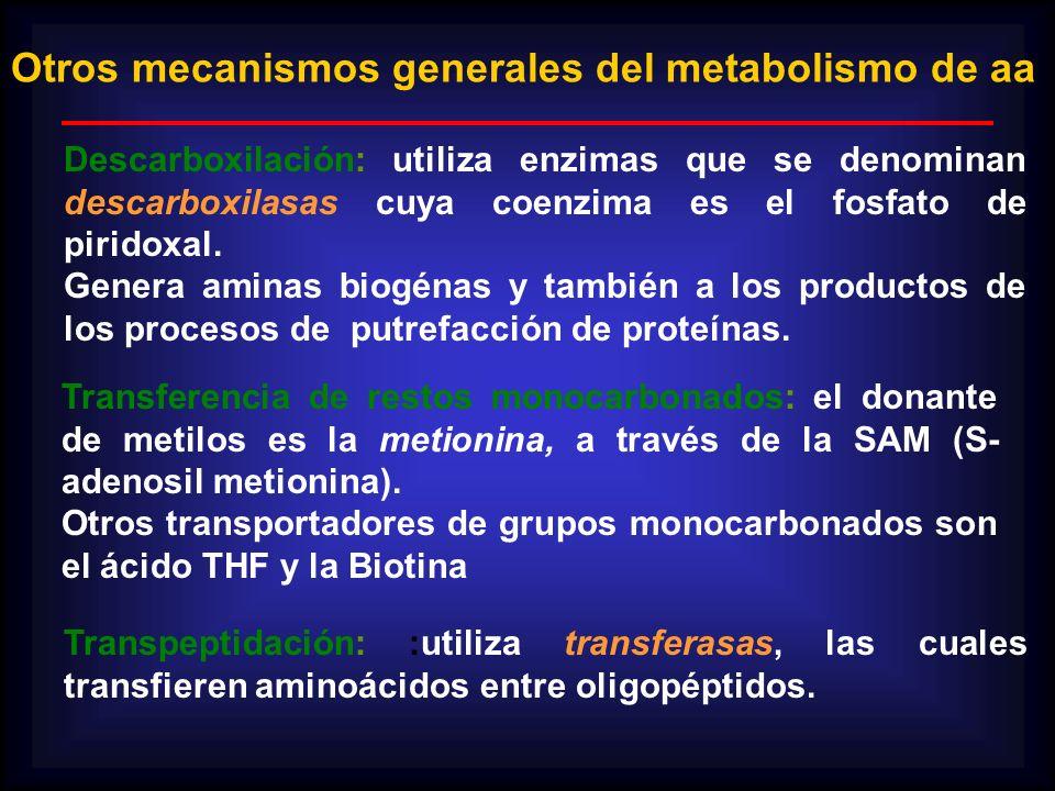 Otros mecanismos generales del metabolismo de aa