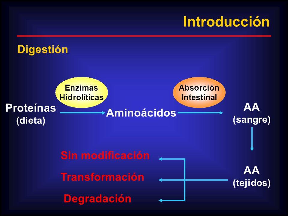 Introducción Digestión Proteínas AA Aminoácidos Sin modificación AA