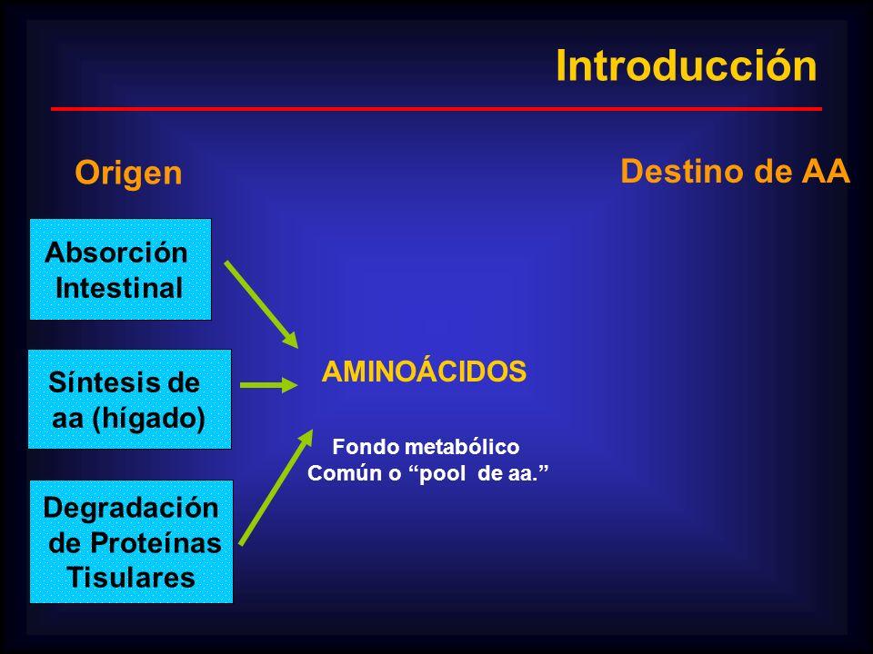 Introducción Origen Destino de AA Absorción Intestinal AMINOÁCIDOS