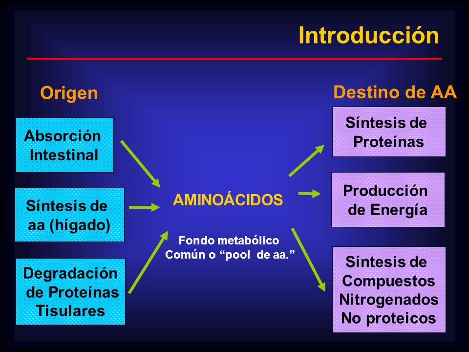 Introducción Origen Destino de AA Síntesis de Proteínas Absorción