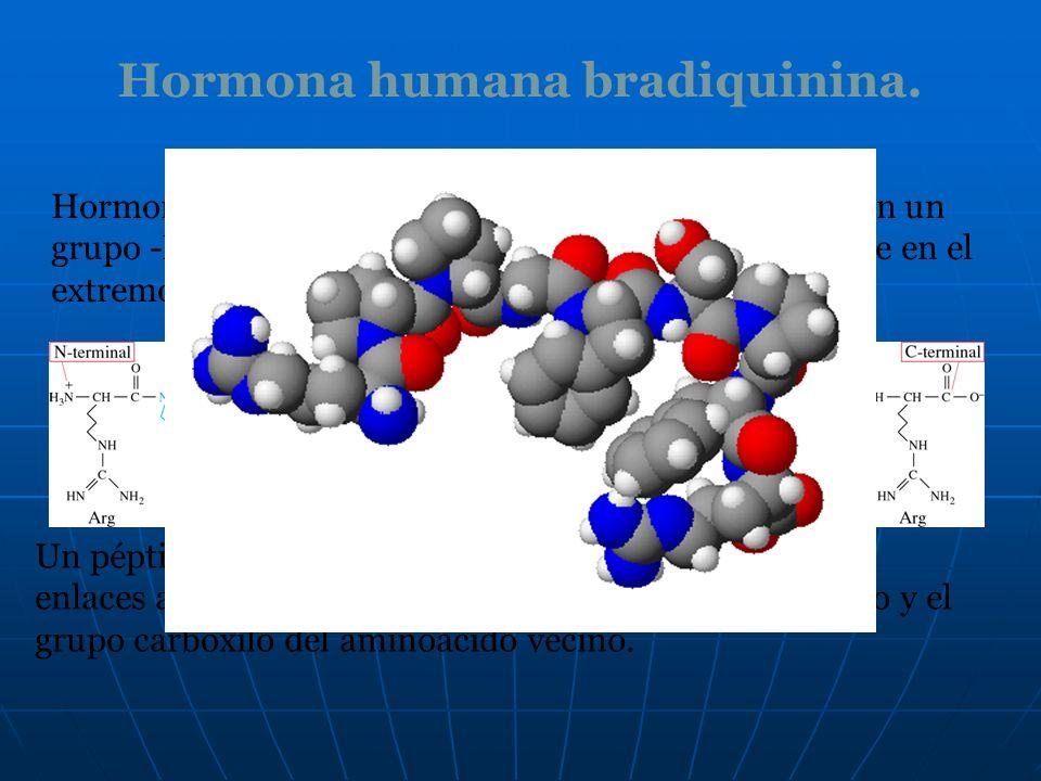 Hormona humana bradiquinina.