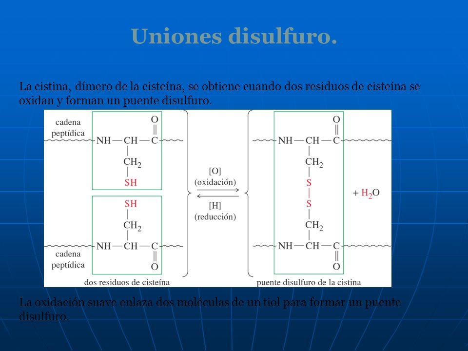 Uniones disulfuro. La cistina, dímero de la cisteína, se obtiene cuando dos residuos de cisteína se oxidan y forman un puente disulfuro.