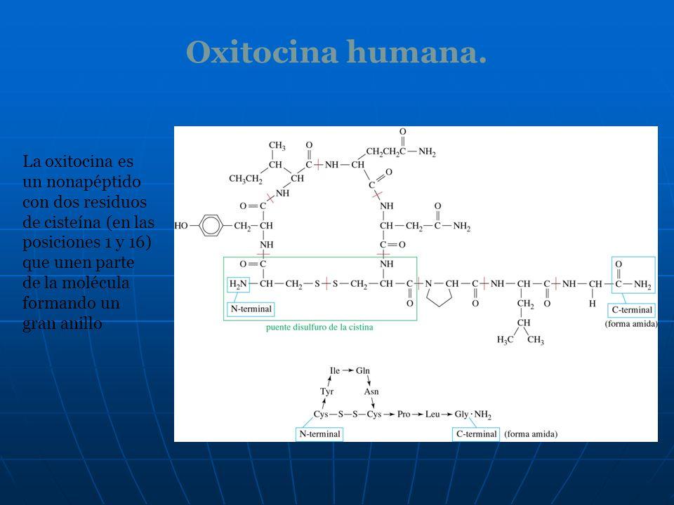Oxitocina humana.