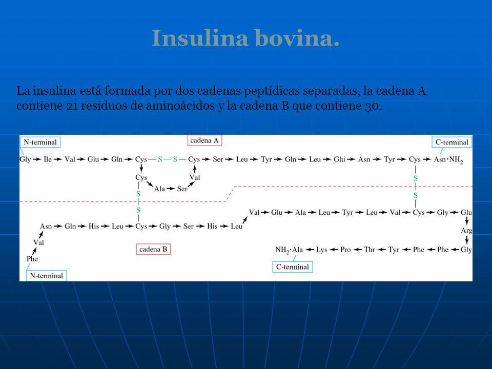 Insulina bovina.