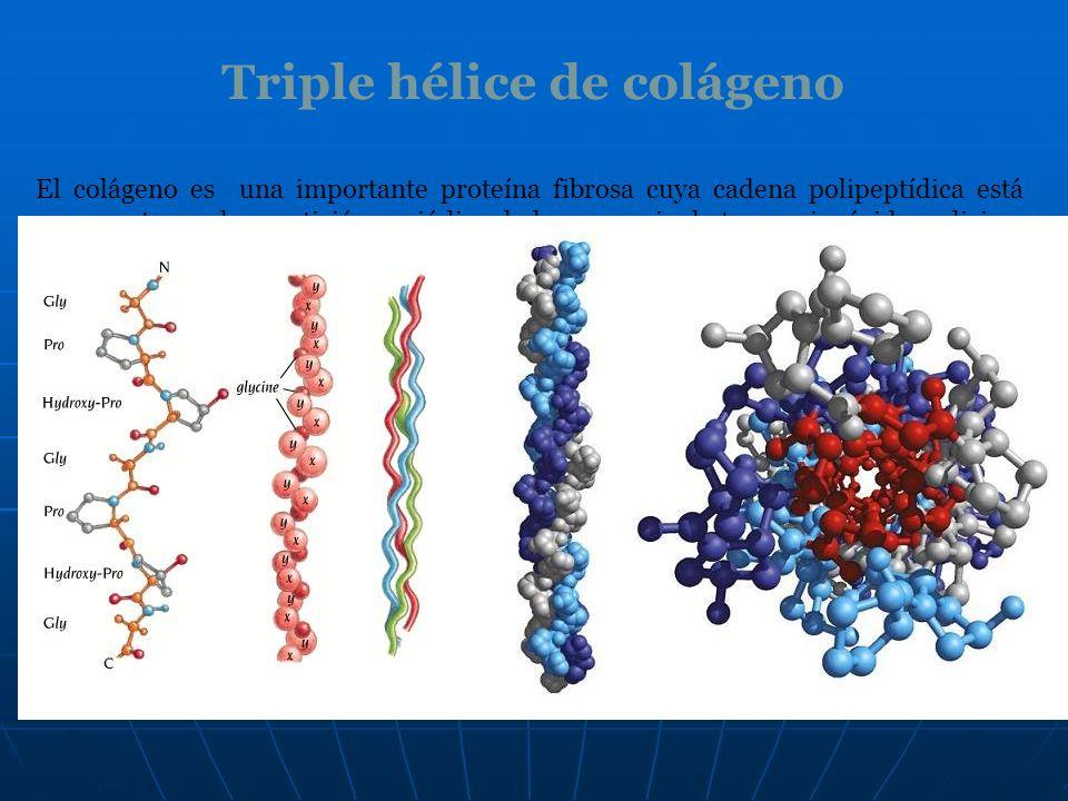 Triple hélice de colágeno