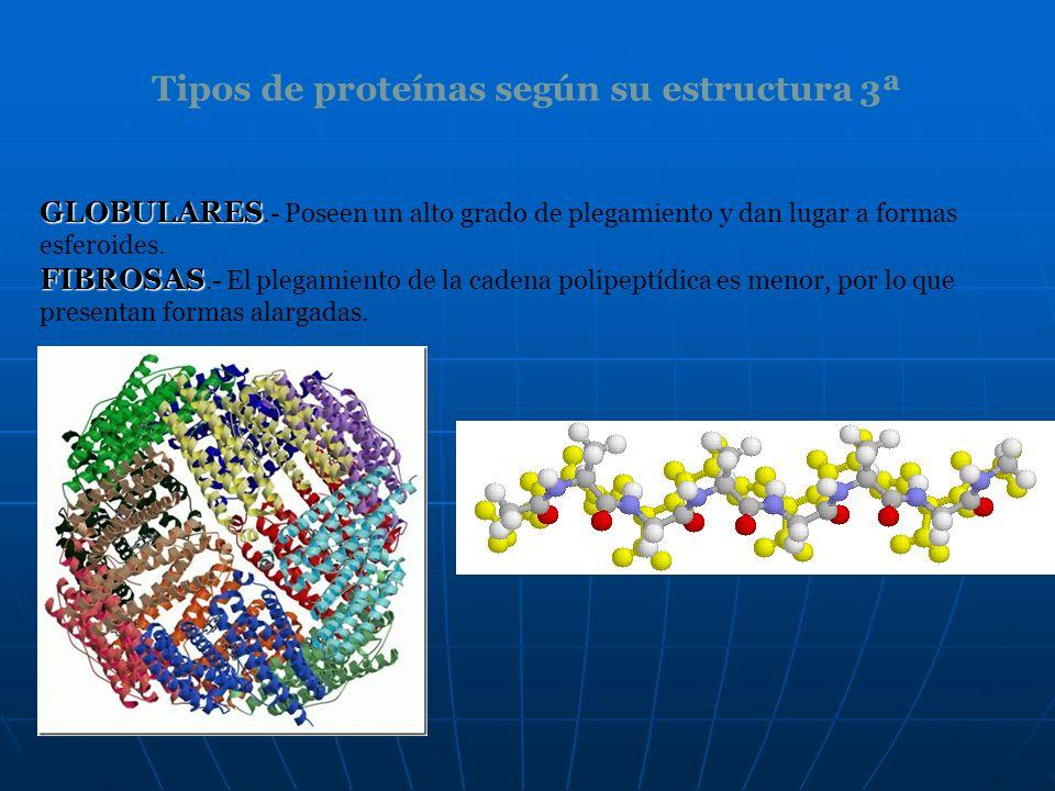Tipos de proteínas según su estructura 3ª