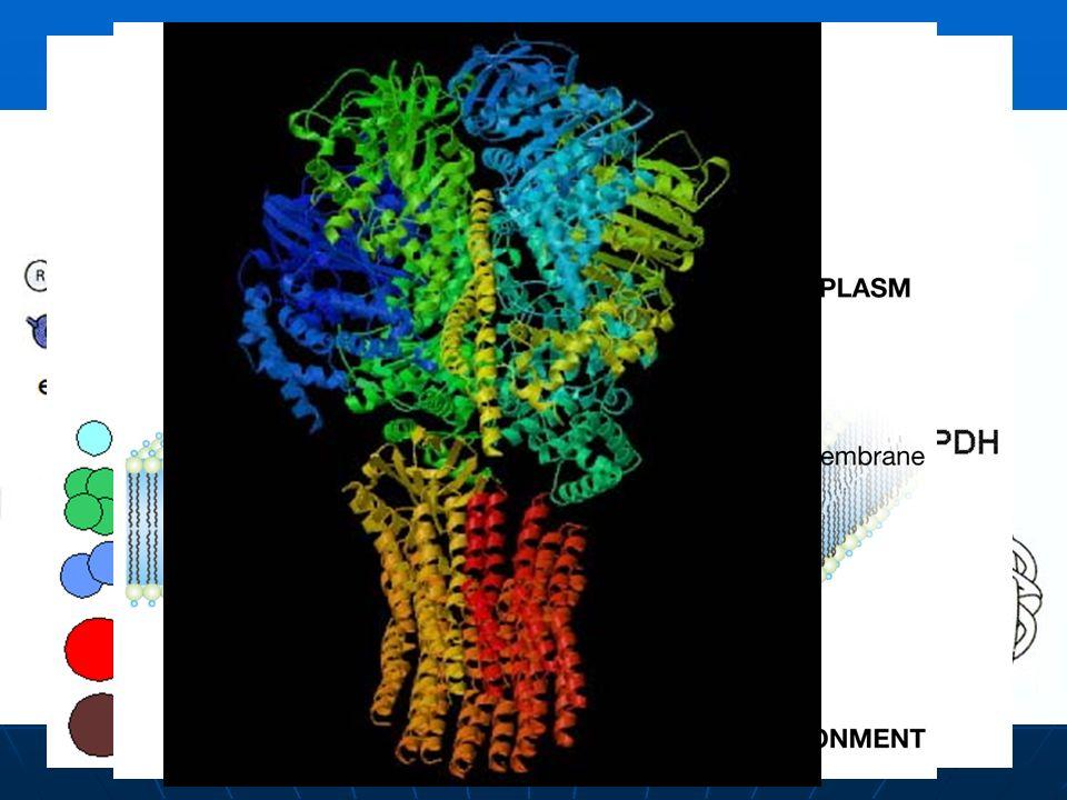 Estructuras de una proteína