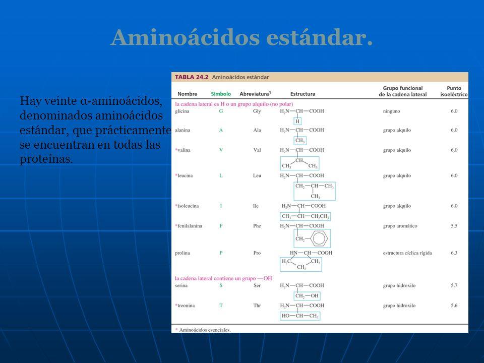 Aminoácidos estándar. Hay veinte α-aminoácidos, denominados aminoácidos estándar, que prácticamente se encuentran en todas las proteínas.