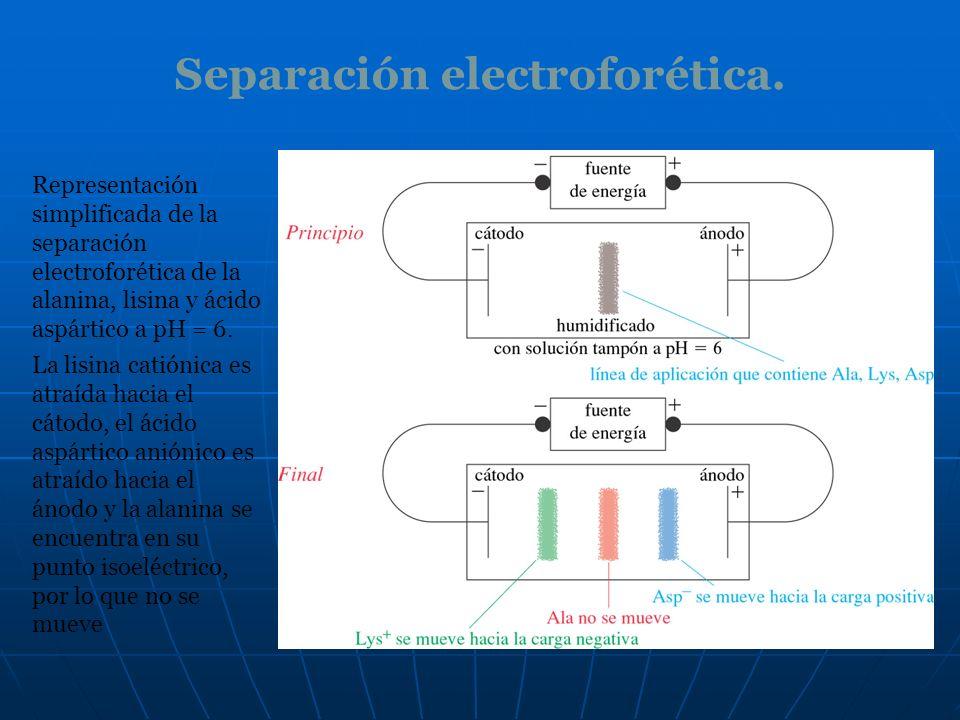 Separación electroforética.