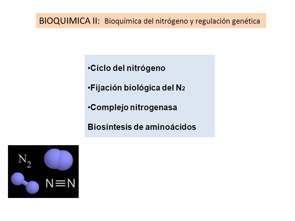 BIOQUIMICA II: Bioquímica del nitrógeno y regulación genética