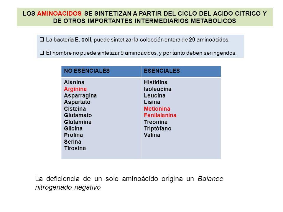 LOS AMINOACIDOS SE SINTETIZAN A PARTIR DEL CICLO DEL ACIDO CITRICO Y DE OTROS IMPORTANTES INTERMEDIARIOS METABOLICOS