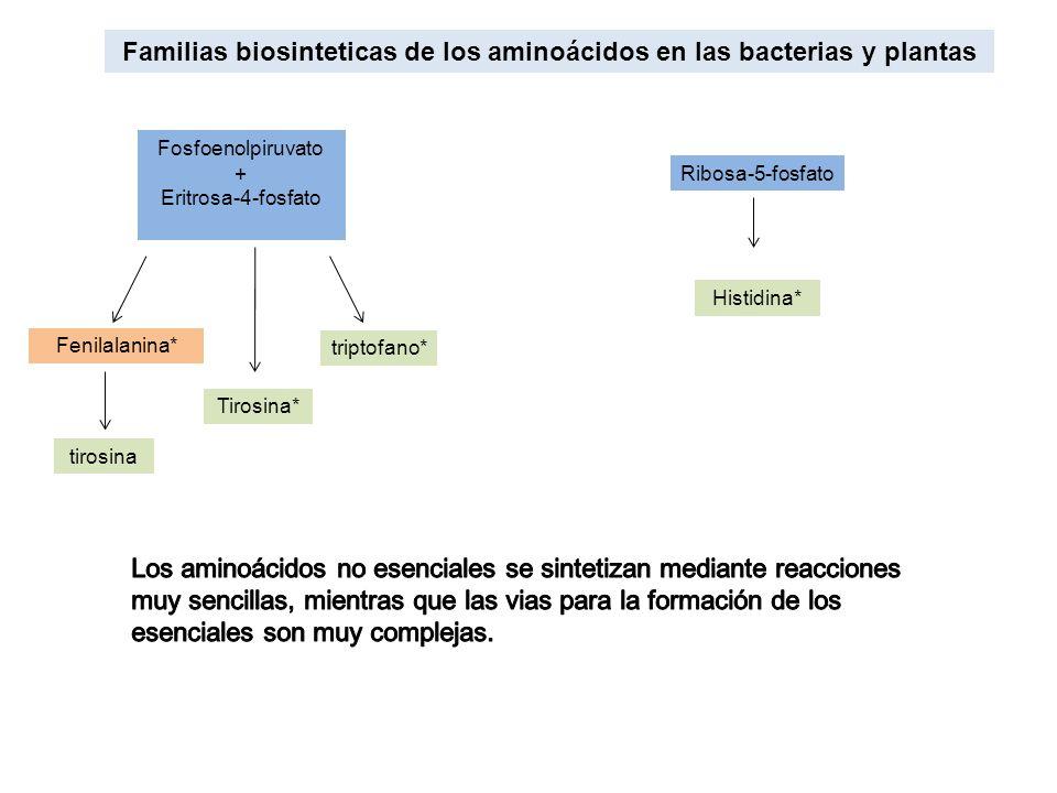 Familias biosinteticas de los aminoácidos en las bacterias y plantas